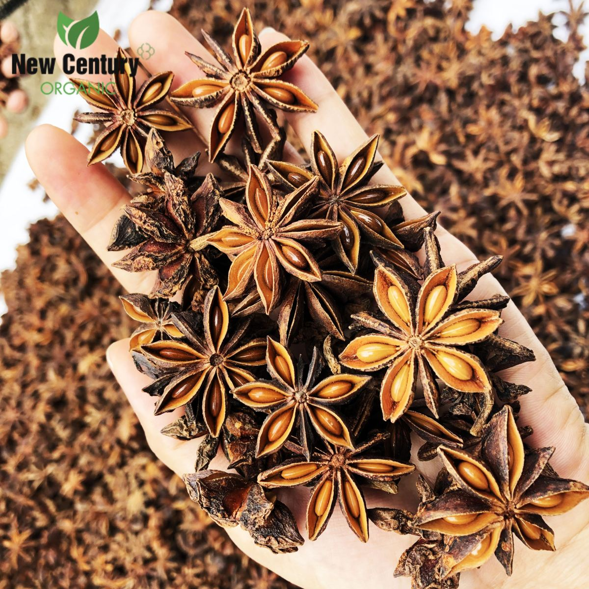Whole Star Anise (Spring/ Autumn)